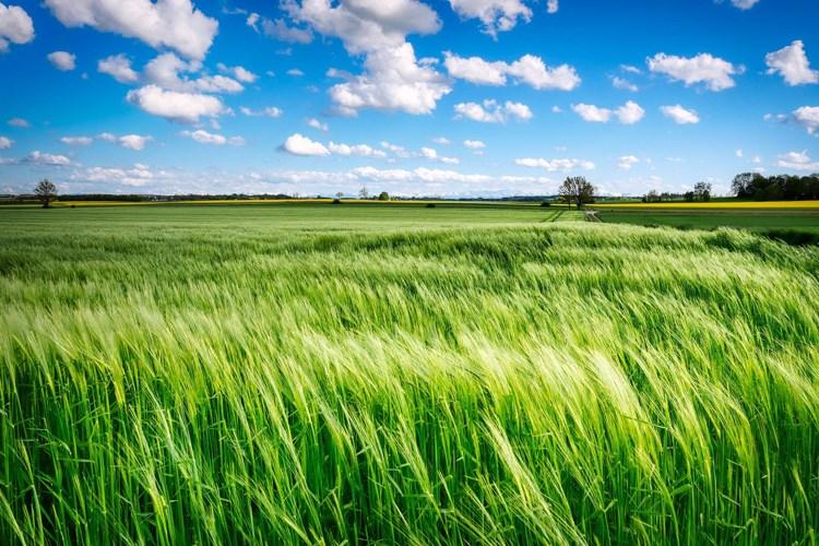 Plan objave natječaja iz Programa ruralnog razvoja do kraja 2021. godine